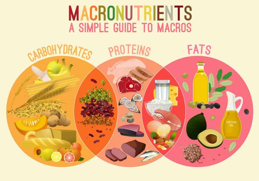 An infographic showing which foods are made up of carbohydrates, fats, and protein macronutrients.