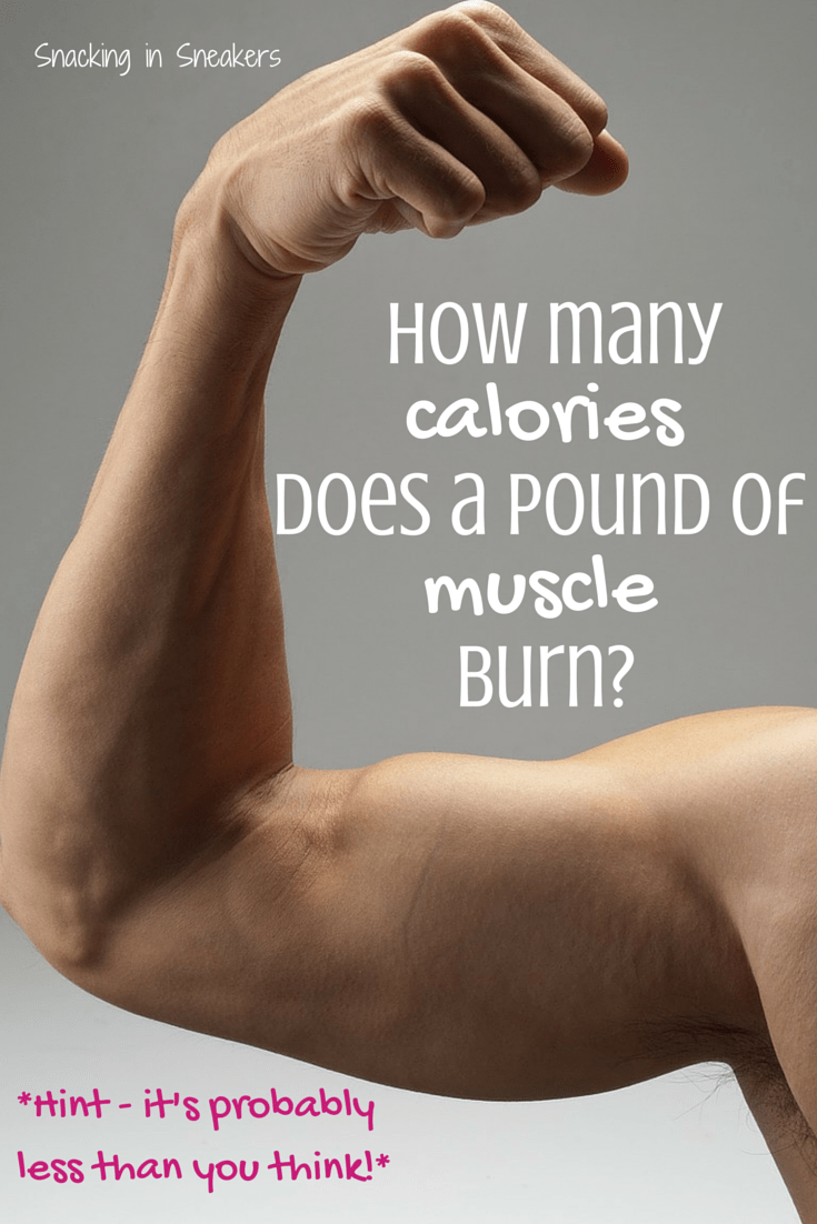 Text that says how many calories does a pound of muscle burn, next to an arm muscle