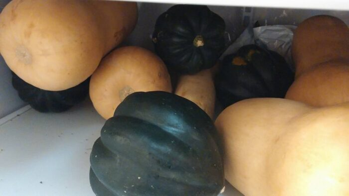 A bunch of butternut and acorn squash on the shelf of a refrigerator.