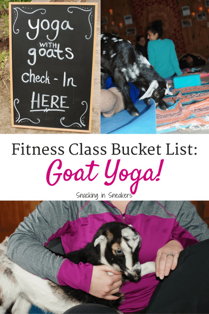 Goat yoga is the latest fitness trend you need to try!