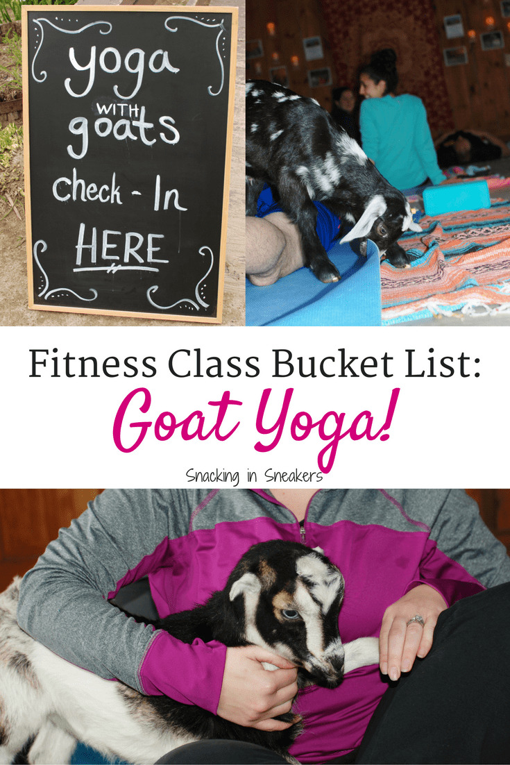Goat yoga is a thing and it is amazing! This new fitness trend sounds kind of silly, but it's so fun and therapeutic. As you flow through yoga poses you'll be treated to baby goats frolicking around the room, ready to snuggle and play with you.