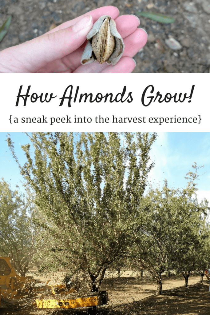 Curious about how almonds grow or almond benefits for your body? Check out this recap of a visit to an almond orchard – plus some almond recipe inspiration!