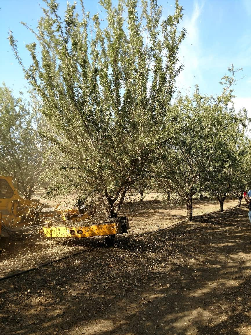 Almond Harvest Experience - Shaker Machine
