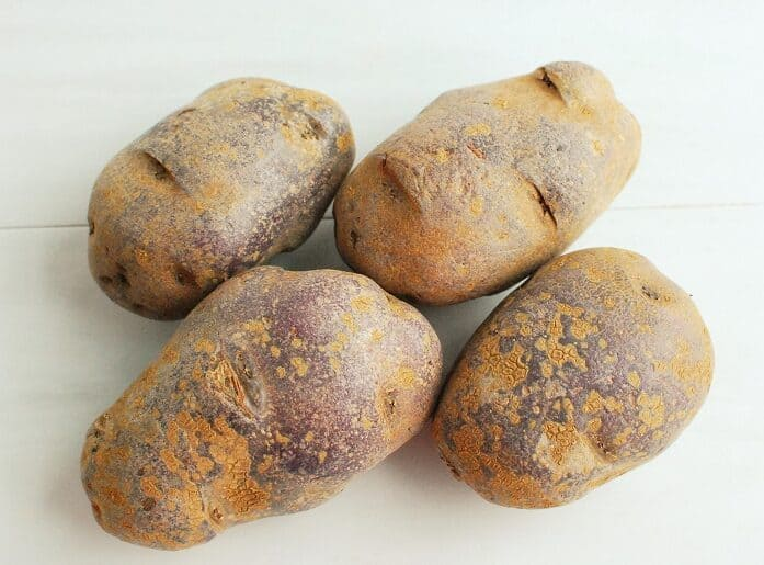 Four purple potatoes sitting on the counter.